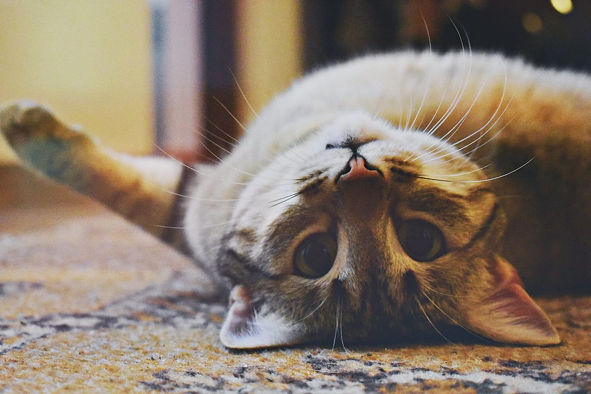 It turns out your cat actually does love you, a new study claims