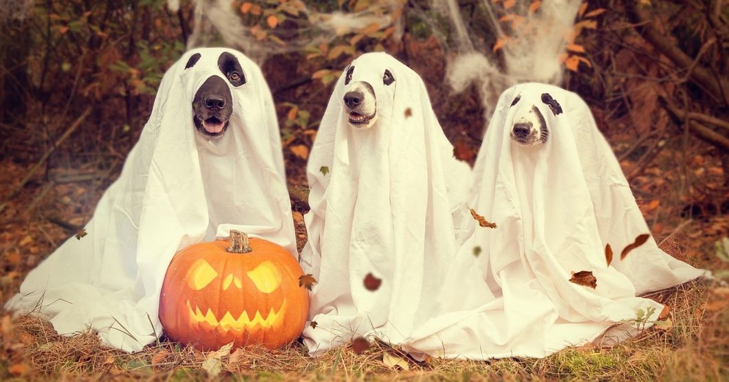 Relevant Halloween Costumes That Are Not Ignorantly Offensive