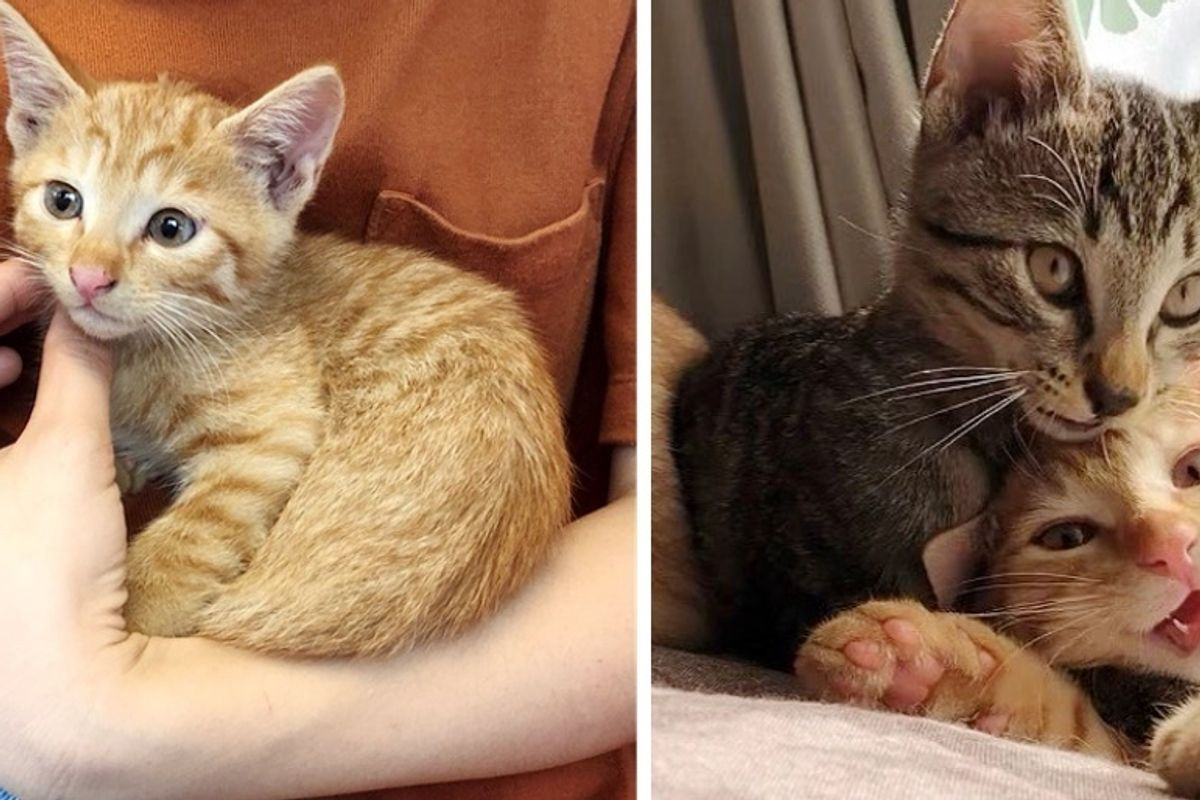 Kitten Found Wandering in Park - Woman Rescued Him and Went Back to Find His Siblings