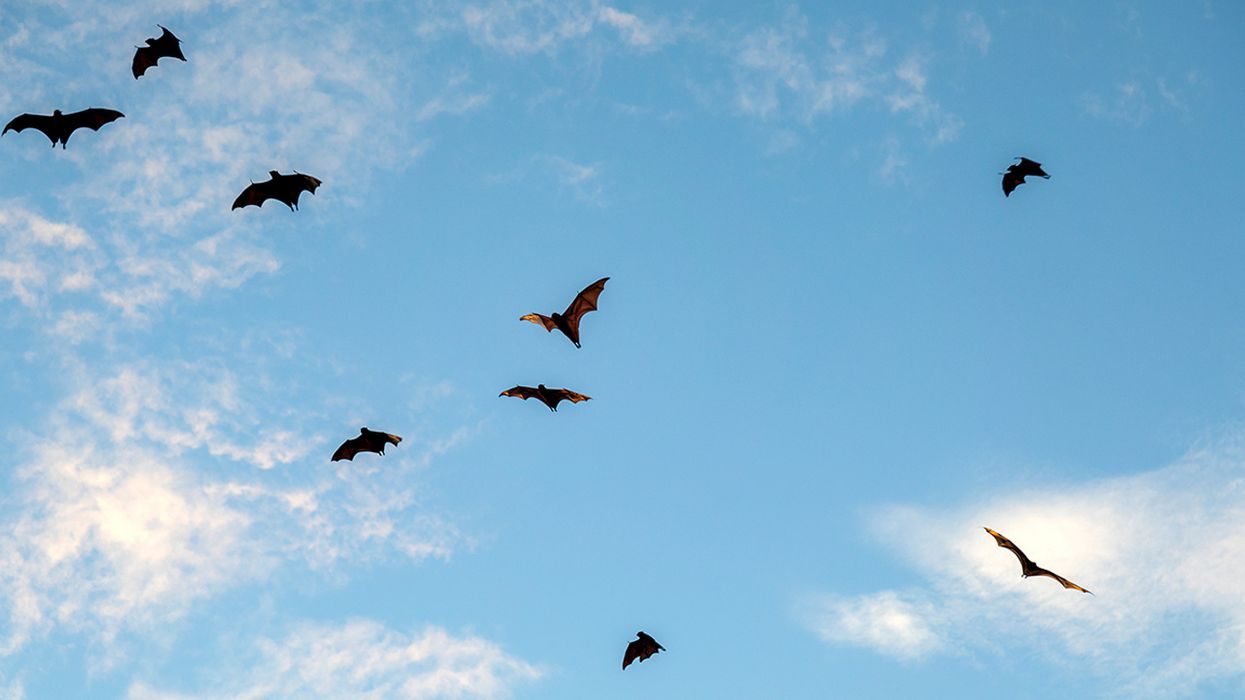 Eek! Bat Populations Are Shrinking. Here Are A Few Ways to Help