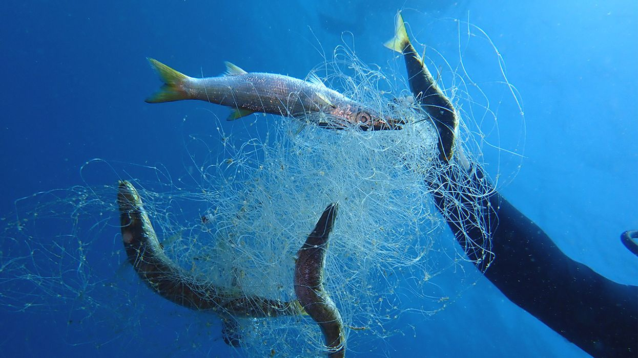 'Zombie in the Water': New Greenpeace Report Warns of Deadly Ghost Fishing Gear