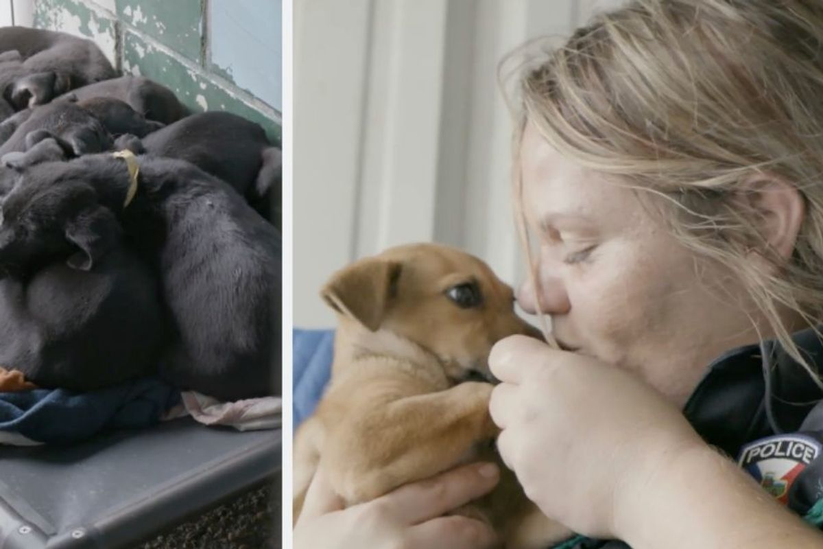 Woman who took animal shelter kill rate from 100% to 0% wins $35,000 'Unsung Hero' award