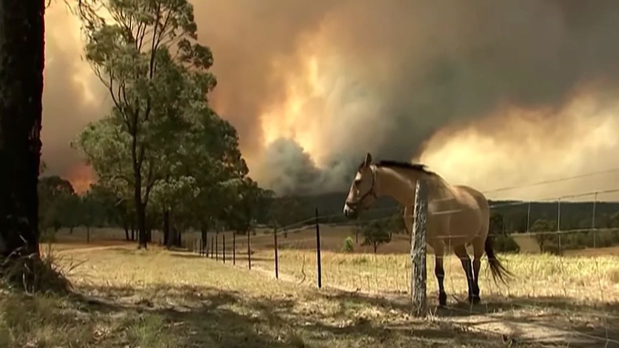 Sydney Faces 'Catastrophic Fire Danger' for First Time as 130 Australian Bushfires Burn