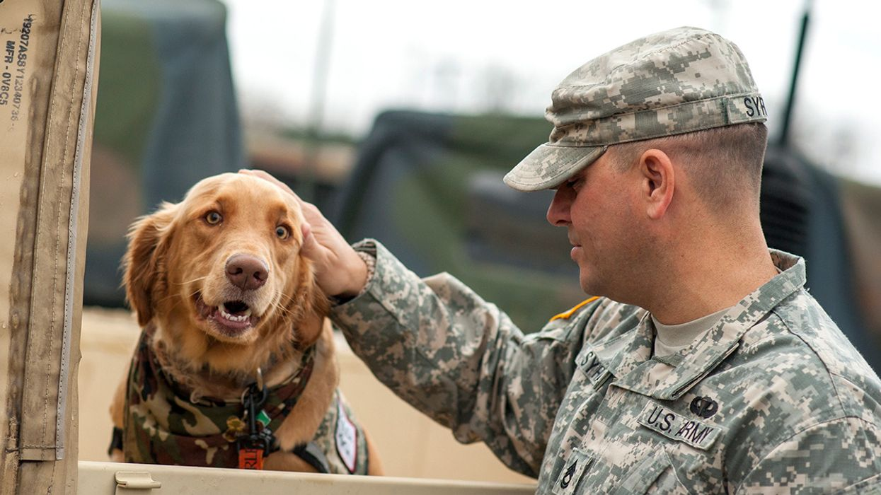 Why Can't Veterans Get Medical Marijiuana for PTSD When People (and Even Dogs) Can in 33 States?