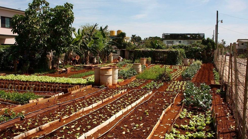 ​Cuba's Urban Farming Shows Way to Avoid Hunger​