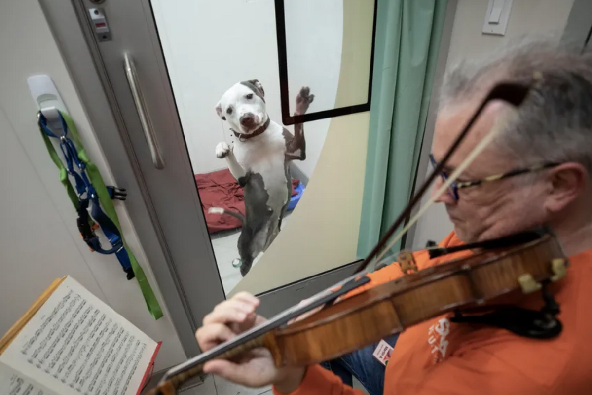 A professional violinist plays Bach for rescued shelter dogs and they love it