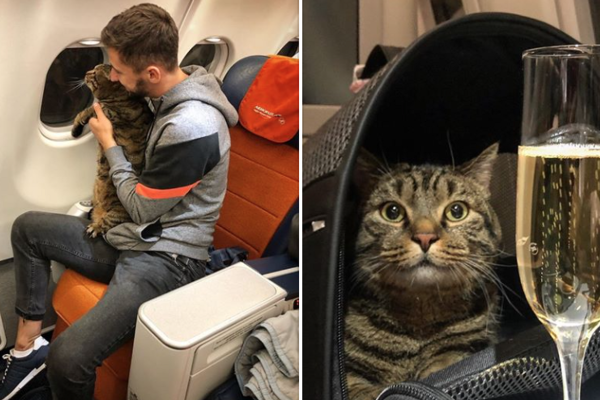 Man pulls off elaborate scheme involving body double to get his overweight cat on an airplane