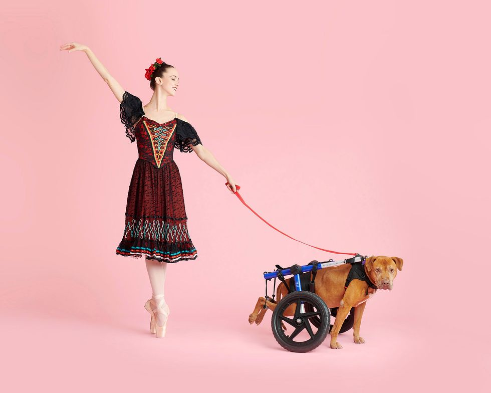 A ballerina in a red and black lace costume holds a leash attached to a dog in a wheelchair apparatus.