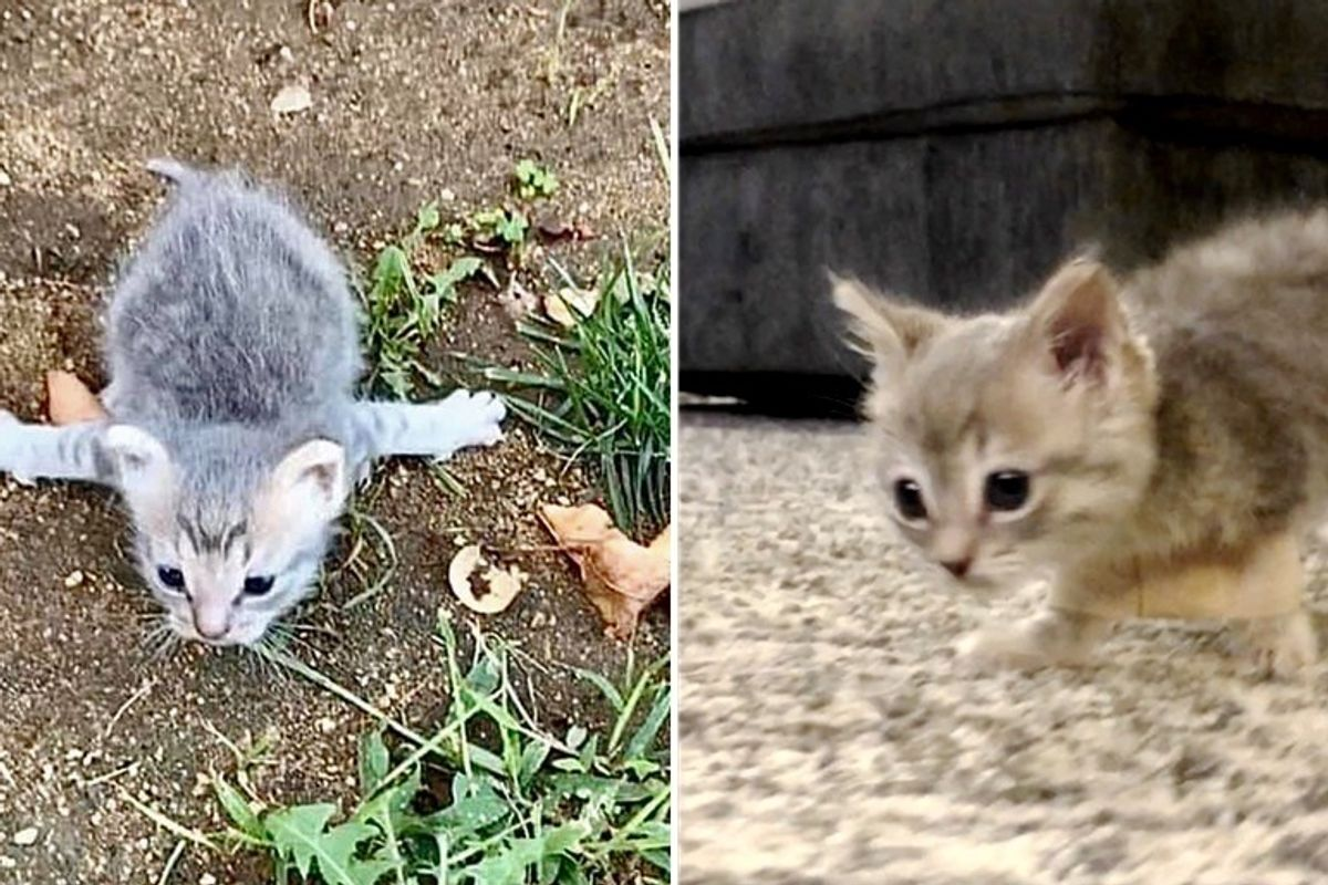Kitten with Rare Condition Rescued from Street, is So Happy When She Can Run Around Again