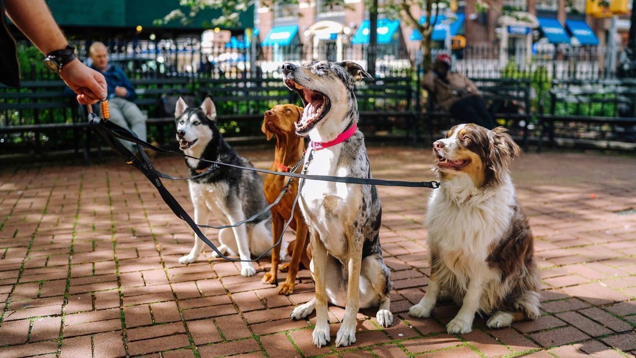 10,000 Dogs Needed for a Study on Canine and Human Aging