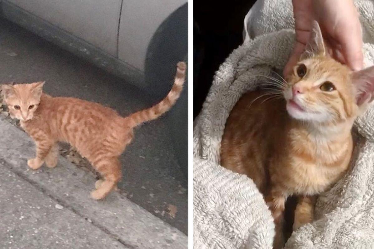 Stray Kitten Waits Outside Home of Family He Befriended, Asking for Help