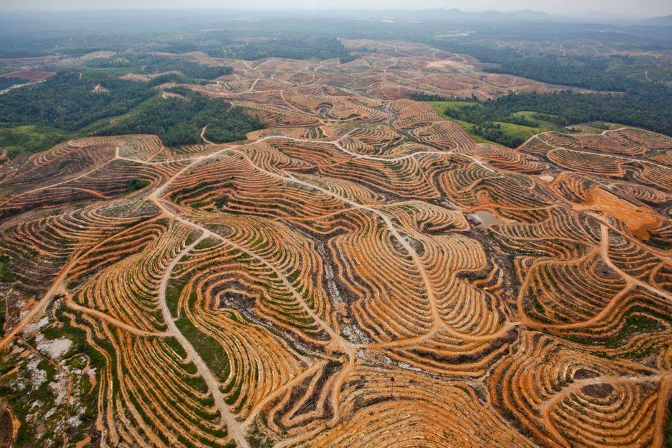 Where has Biodiversity Gone?