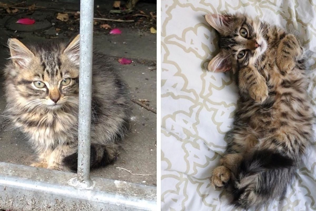 Man Went for Walk with His Cat and Came Home with Kitten They Rescued