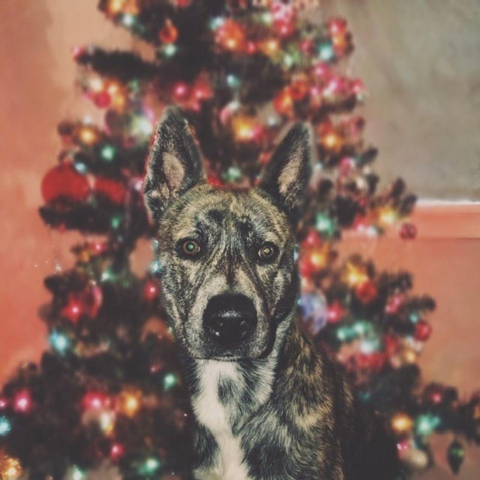 Christmas: Best Dog Presents