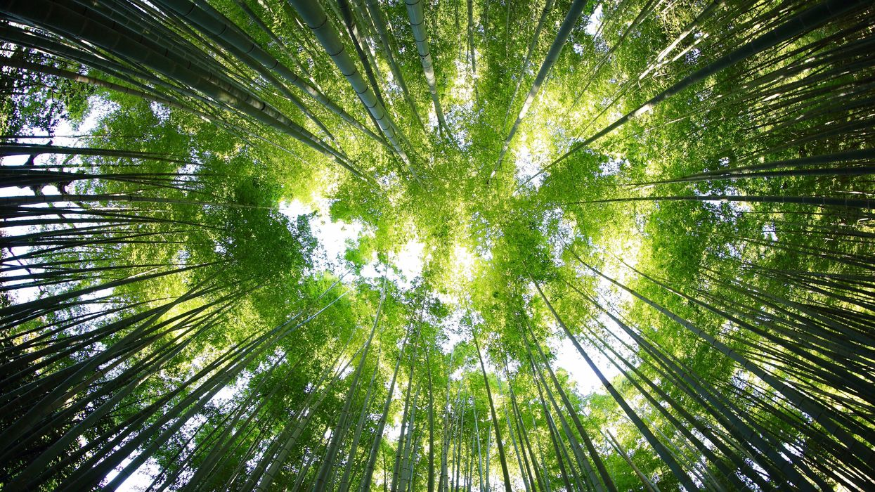 How Bamboo Building Can Cool the Climate