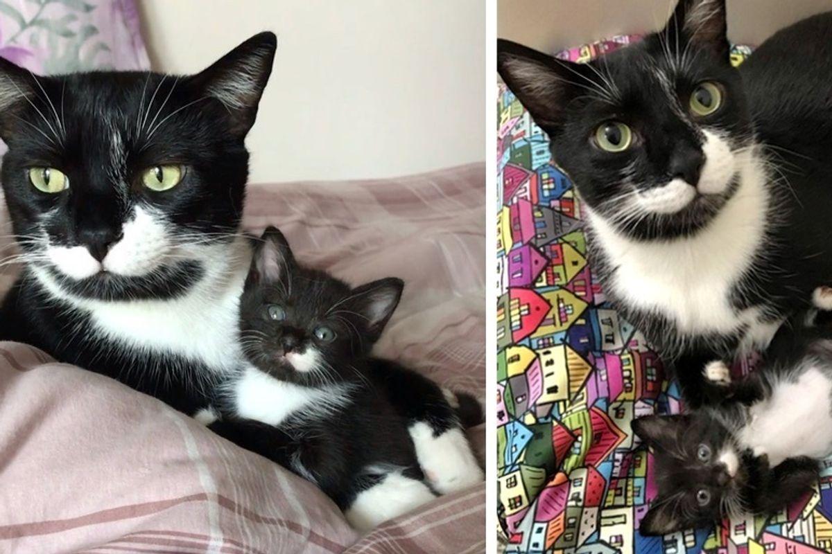 Kitten from the Street Befriends Cat Who Has Mustache Just Like Him