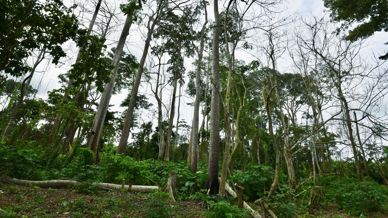 New Law Hands Over Protected Forests in Ivory Coast to Chocolate Industry