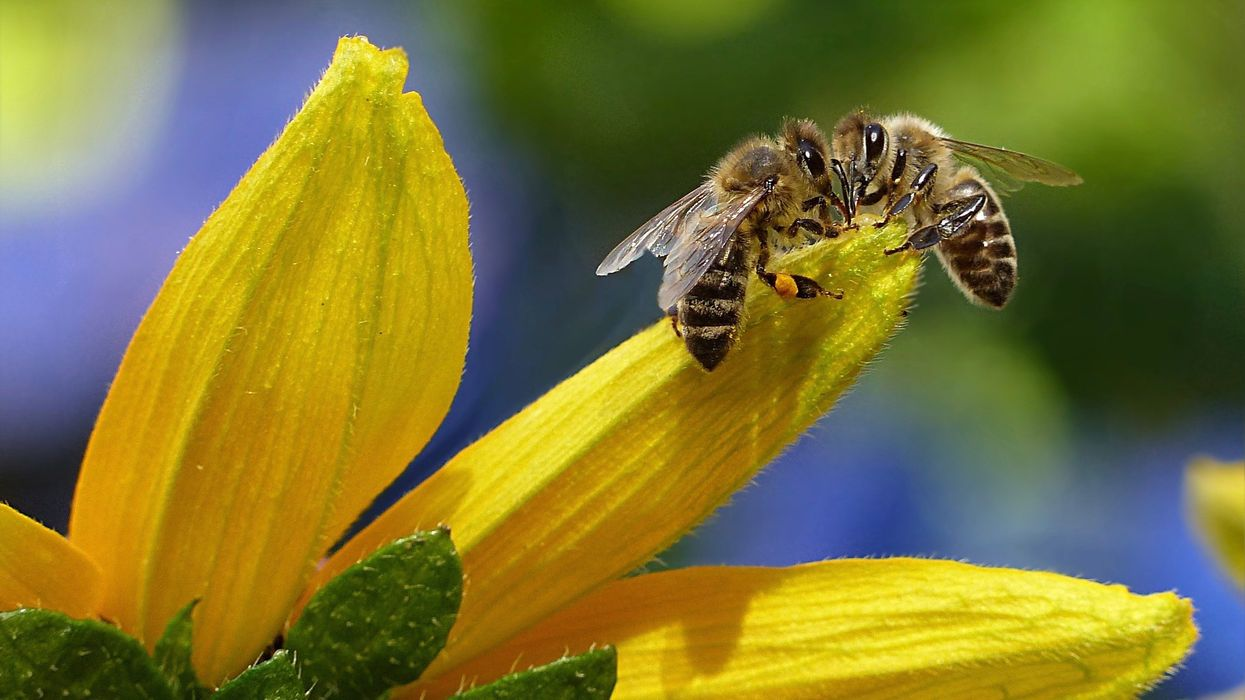 New Study Finds Biodiversity Boosts Crop Yields, Pollinators and Pest Control
