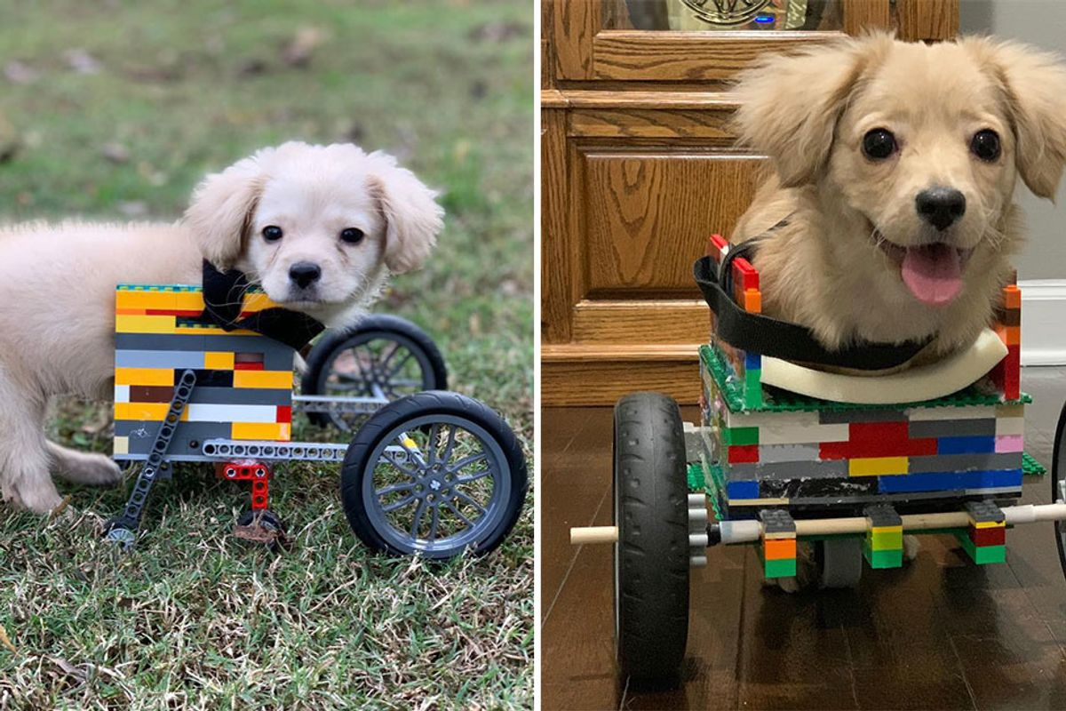 Dog with 2 legs gets wheelchair built out of Legos by 12-year-old boy