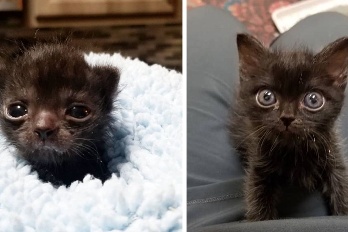 Kitten Who is Unusually Small, Finds Someone to Help Her Grow