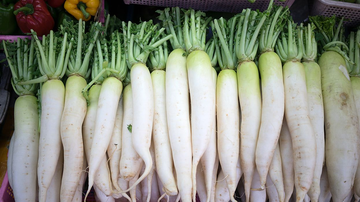 What Is Daikon Radish, and What Is It Used For?