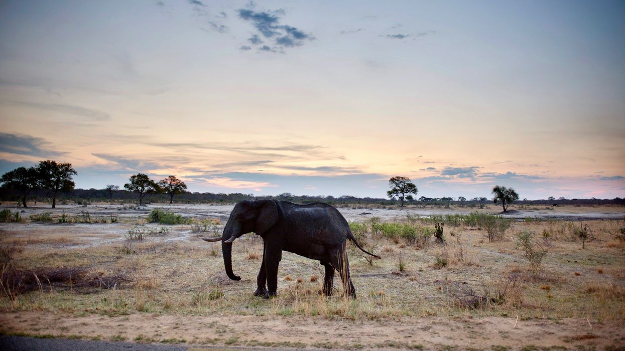 55 Elephants Have Died in 2 Months From Unprecedented Zimbabwe Drought, Wildlife Agency Says