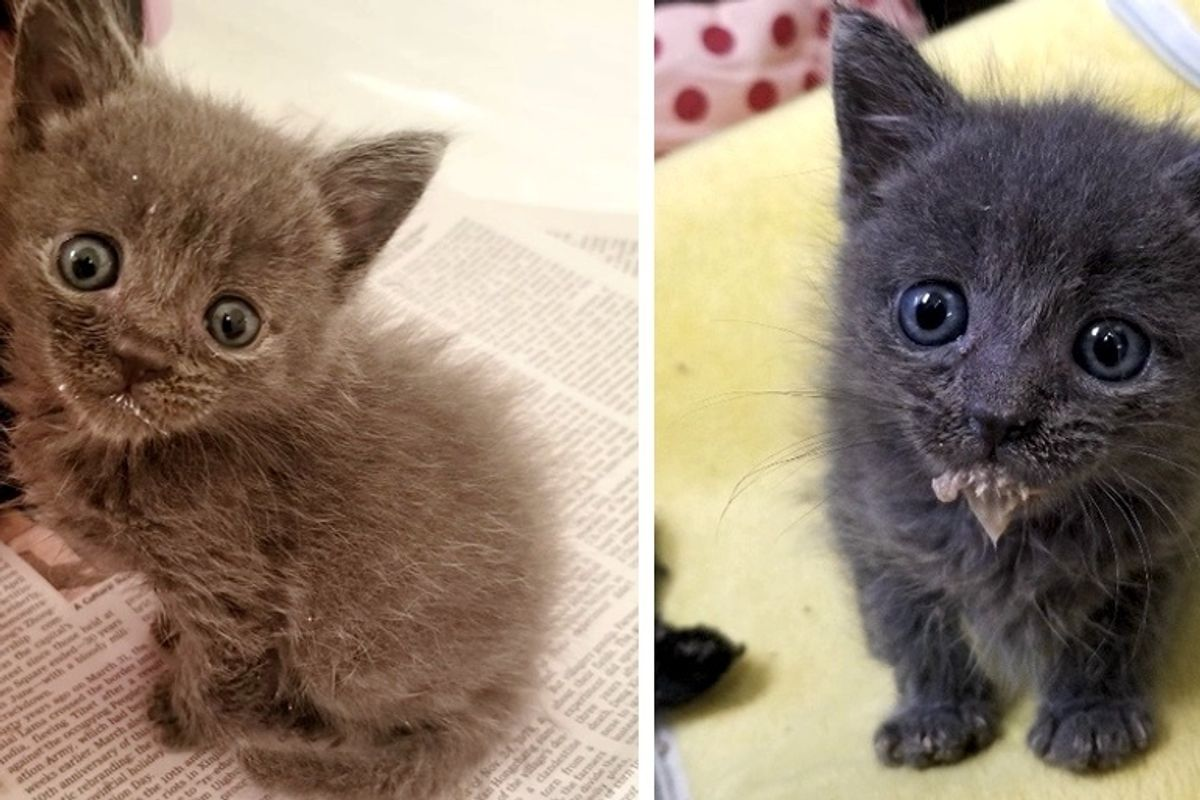 Kitten Insists On Being Cuddled After He Was Found Wandering Along River