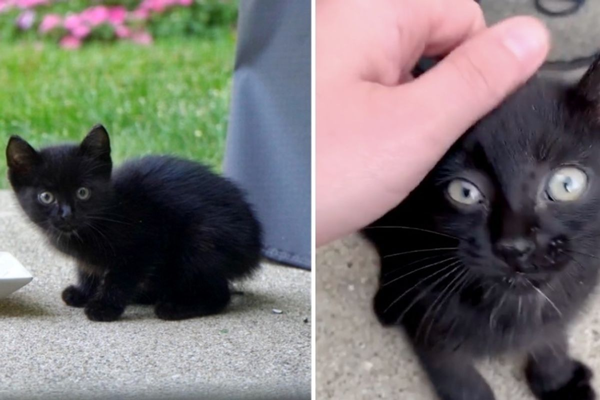 Stray Kitten Finds Family That is Kind to Him, and Decides to Move Right in