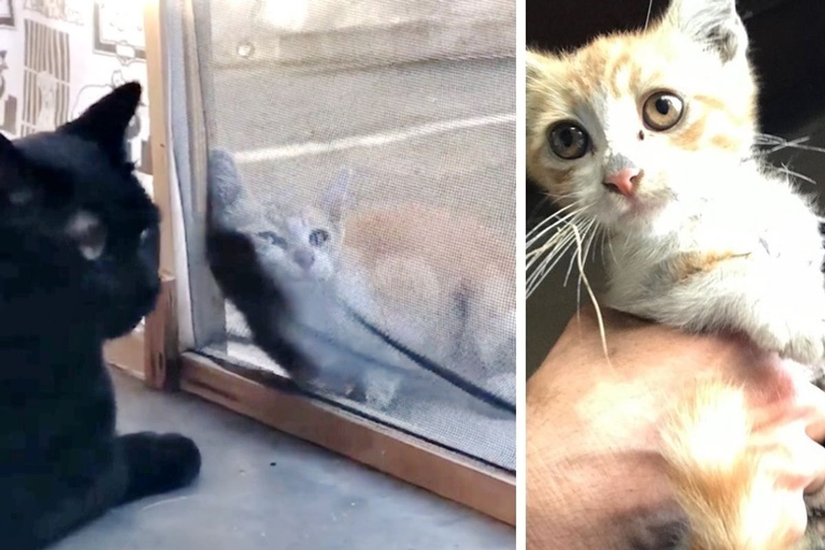 Man's Cat Sees Stray Kitten Wandering Up to Them, Meowing for Help