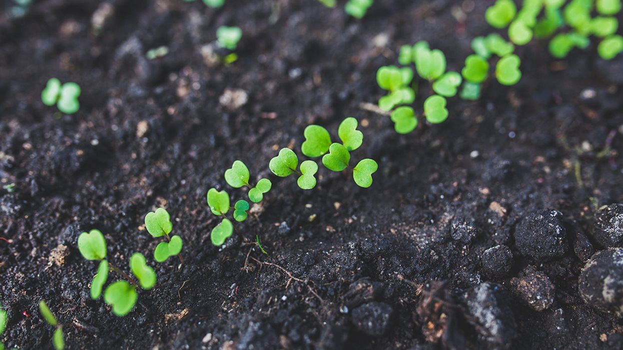 Soil: The Secret Weapon in the Fight Against Climate Change