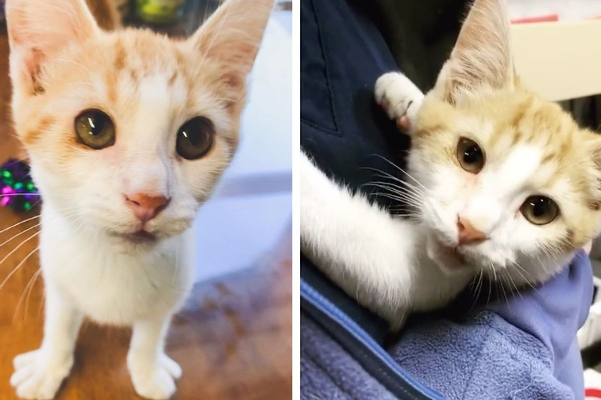 Kitten With Crooked Smile Gives Everyone Cuddles After He Was Rescued from Streets