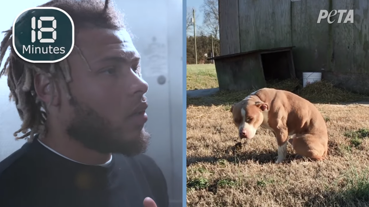 NFL star Tyrann Mathieu tests how long he can last locked inside a freezer to raise awareness for pet safety