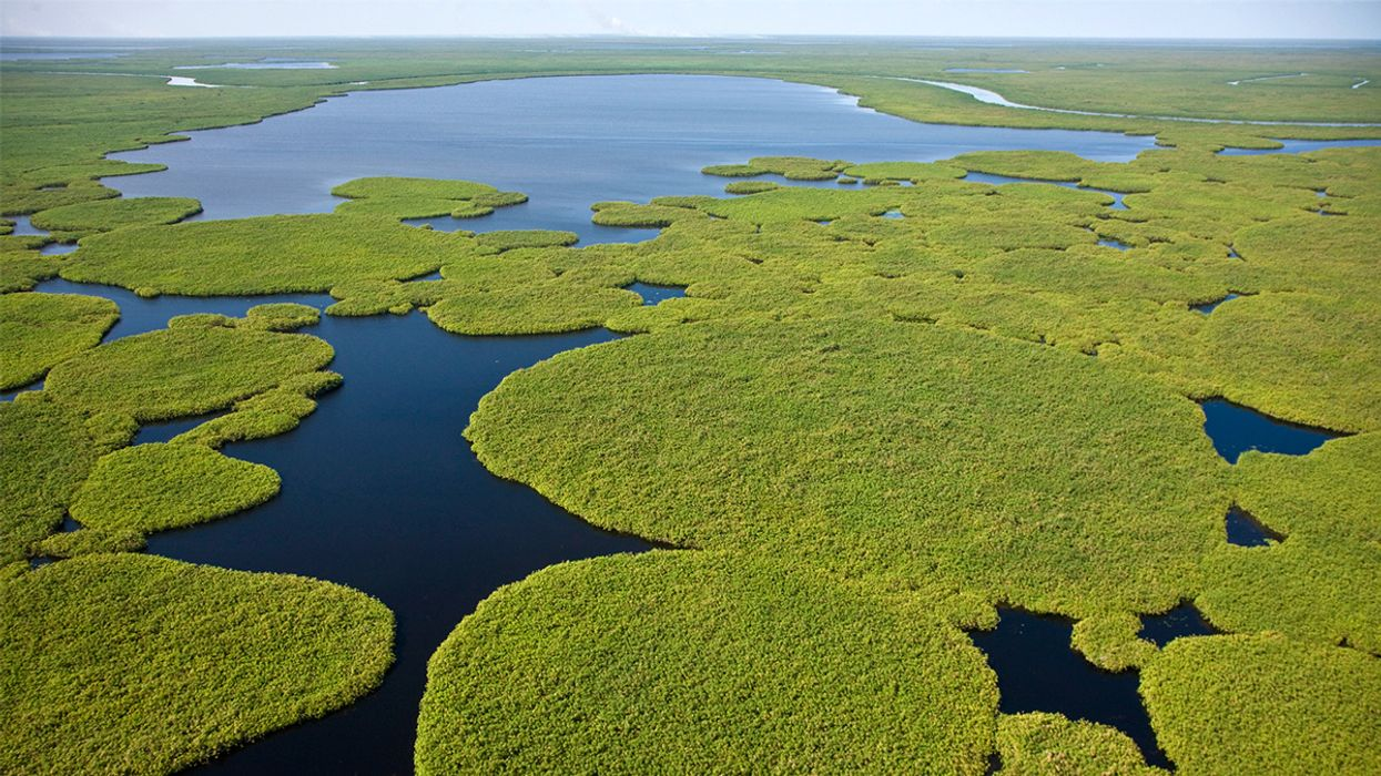 African Wetlands a Major Source of Methane Emissions, Study Finds