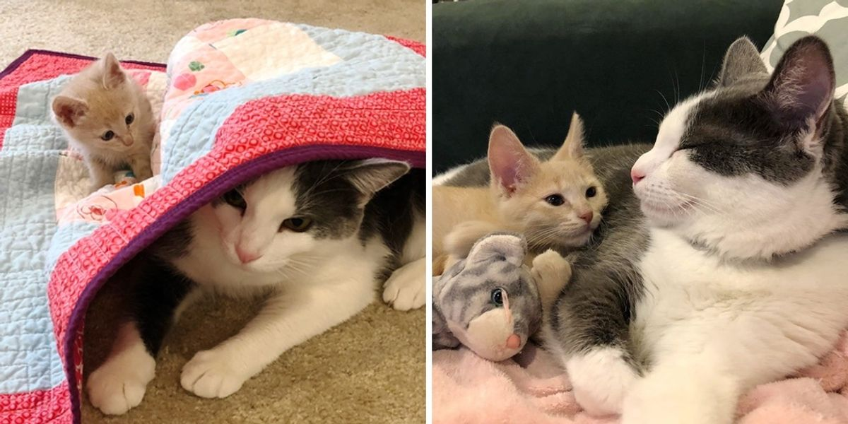 Kitten Insists on Being Friends with Cat and Wouldn't Take No for an Answer