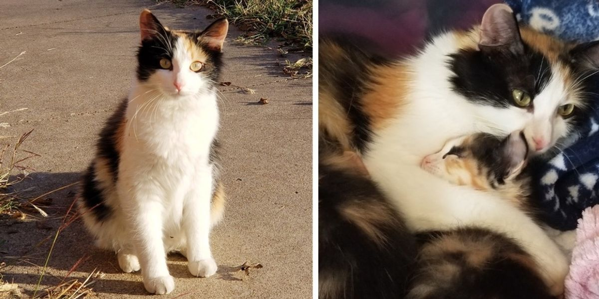 Cat Walked into Woman's Apartment with a Kitten, Then Came Back with More