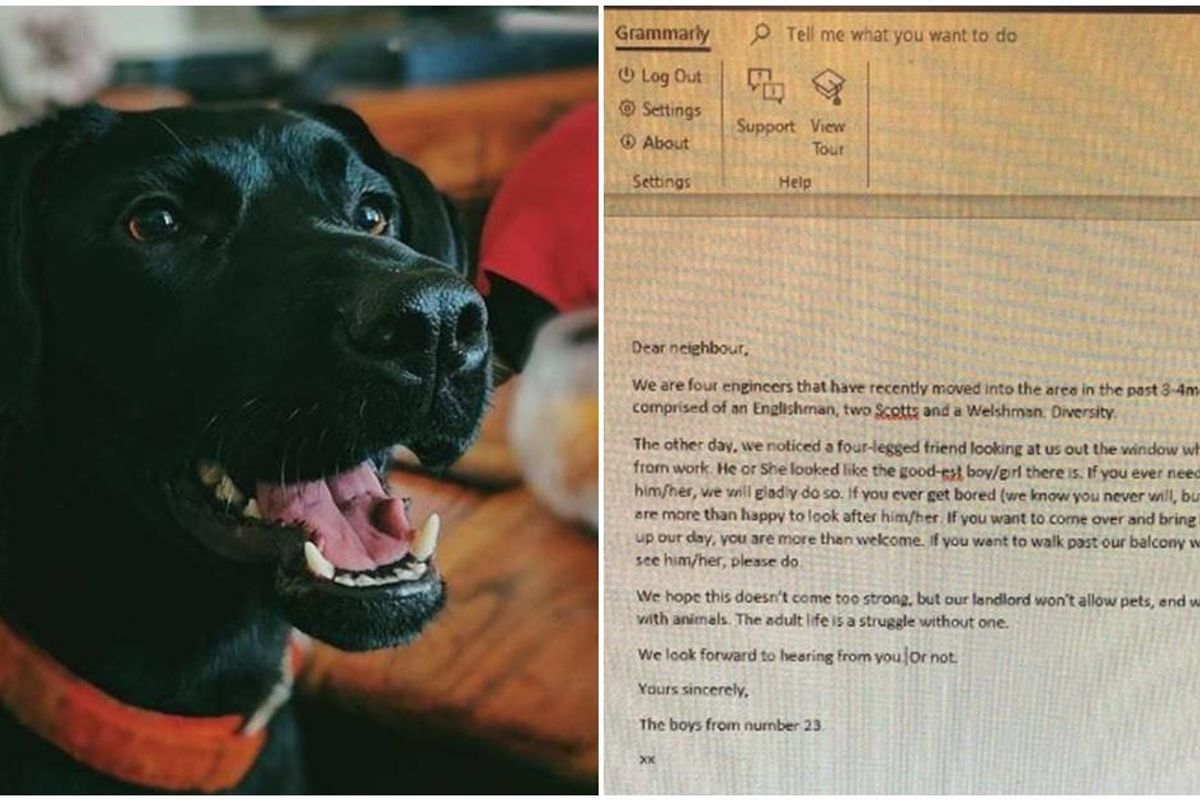 Four guys asked their new neighbor if they can walk her dog, and the dog wrote back