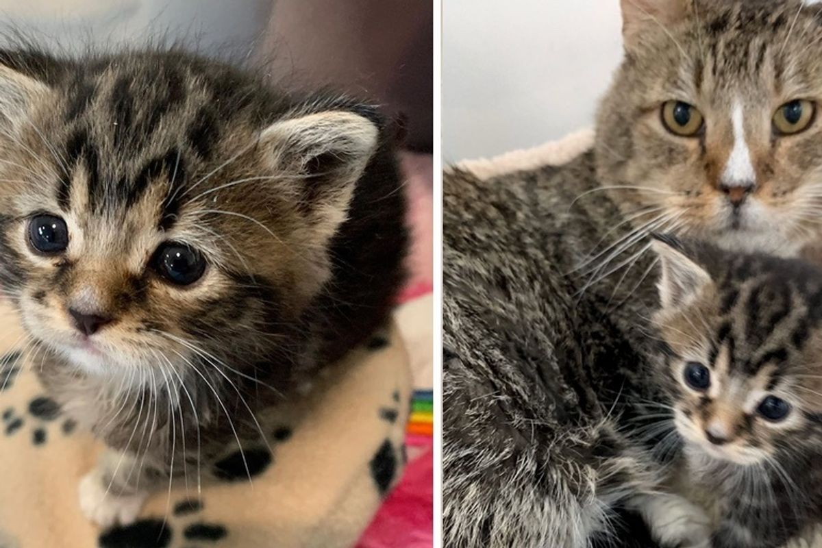 Rescued Kitten Won't Stop Crying Until Grandpa Cat Takes Her Under His Wing