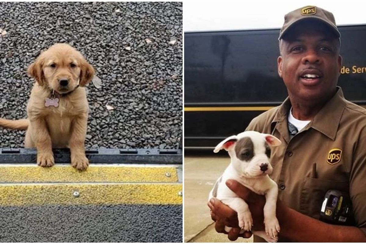 UPS drivers have an Instagram page about dogs they meet on their routes and it's pure joy