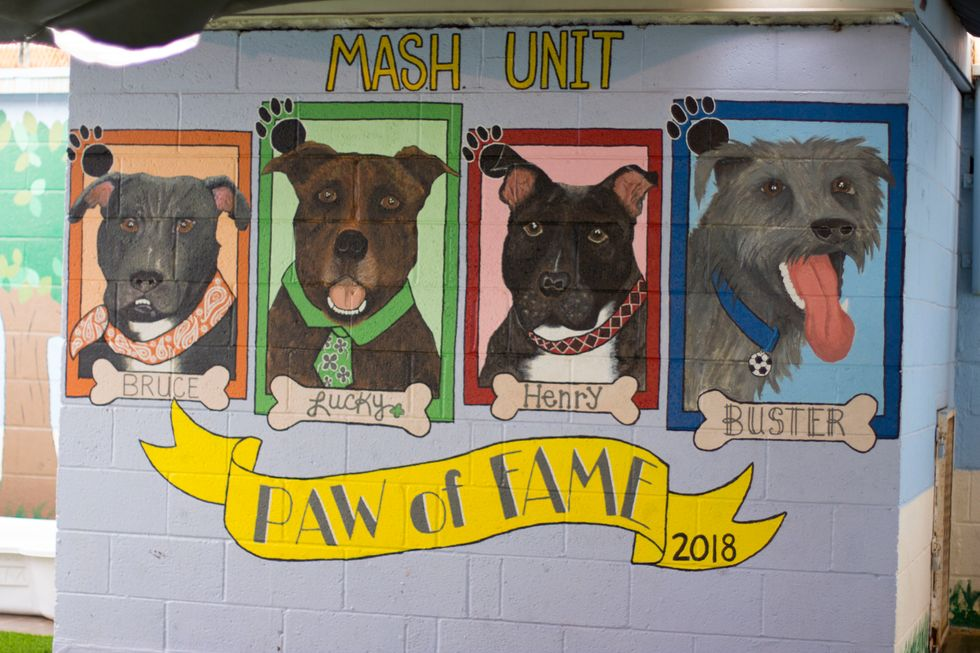MASH provides a second chance for inmates and animals