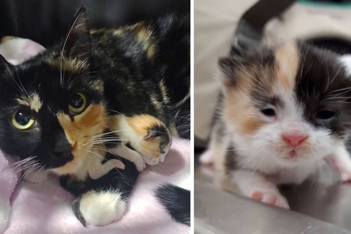 Cat Is So Happy When Rescuers Help Her Only Kitten Thrive