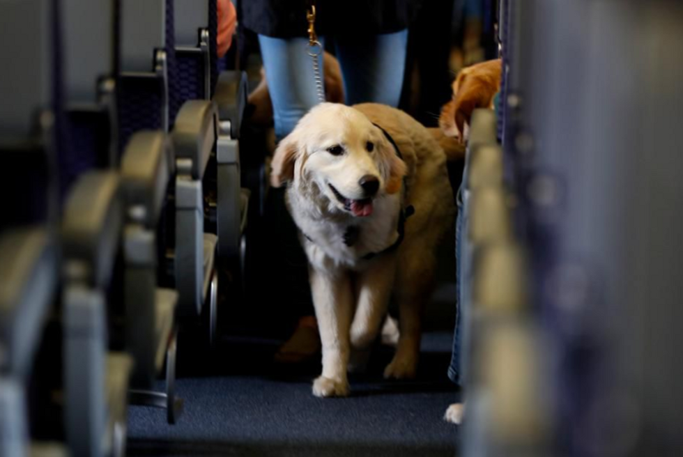 Health benefits you can get with Emotional Support Animals