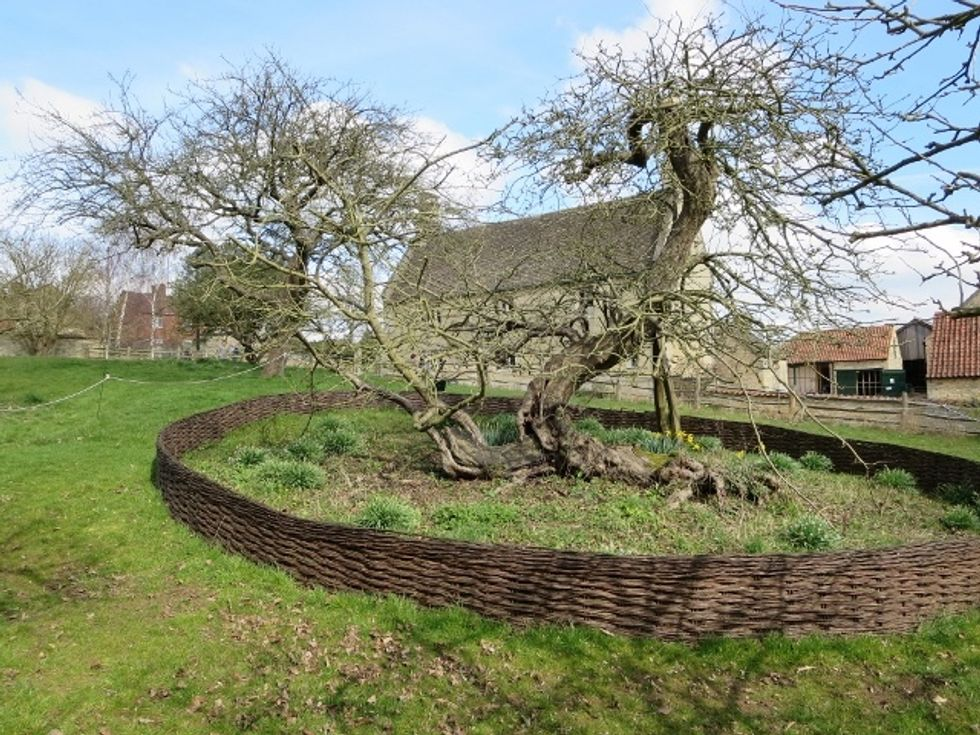 Isaac Newton\u2019s apple tree at Woolsthorpe Manor, Lincolnshire. In the background: the house where he was born.