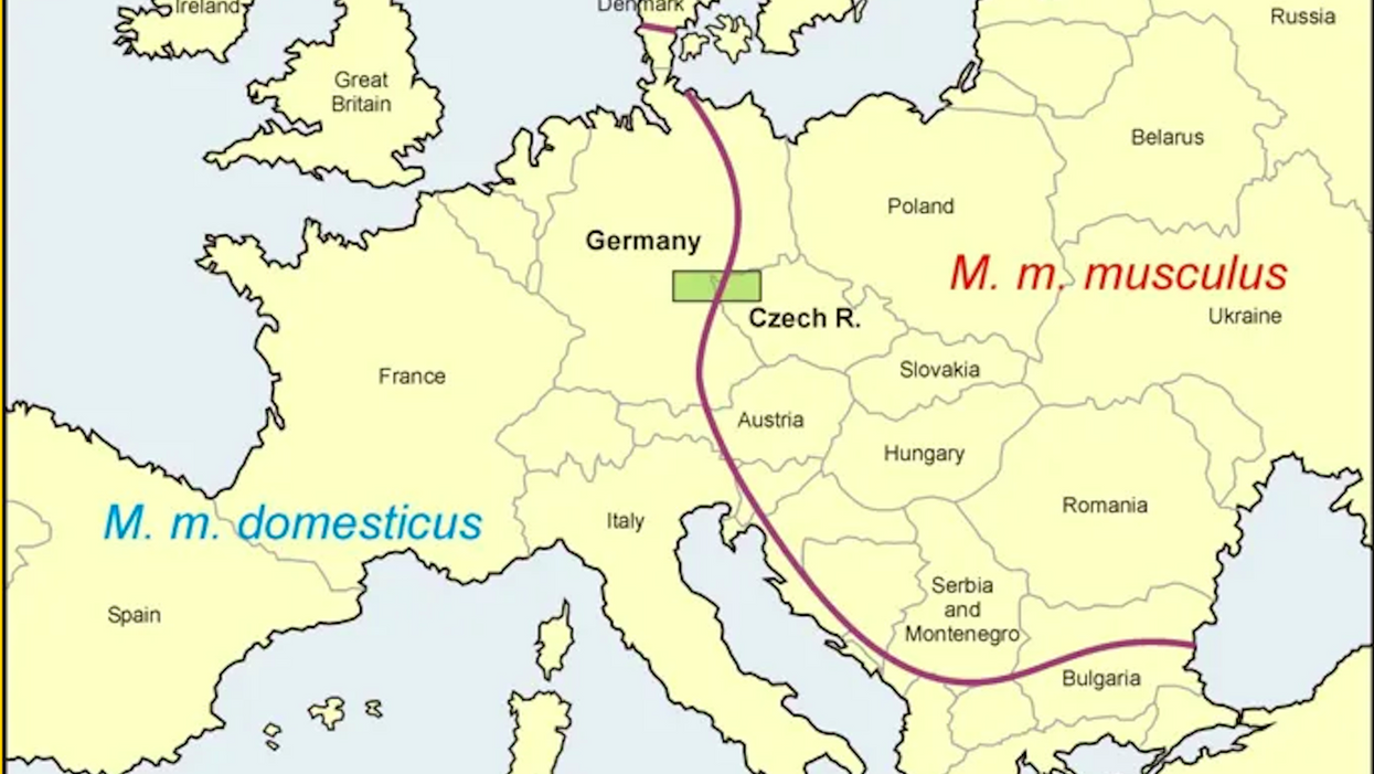 Europe's two main house mouse areas. West: M.m. domesticus, east: M.m. musculus