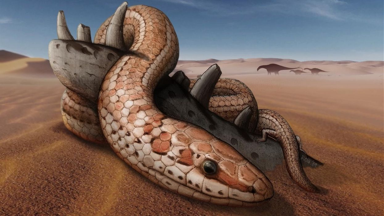 Snakes with hind legs were the old normal