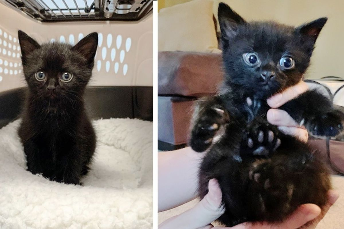 Man Hears Kitten's Cries and Rescues Him From Roadside Just in Time