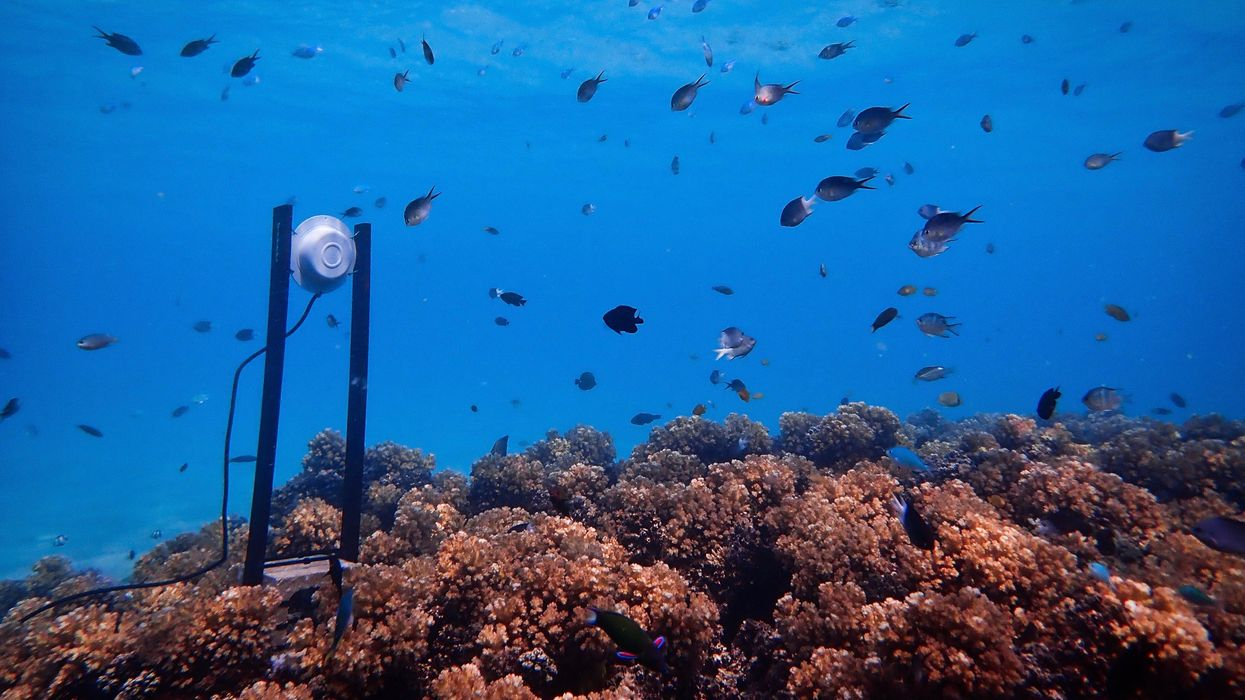 Loudspeakers Can Help Bring Degraded Reefs Back to Life, Study Shows