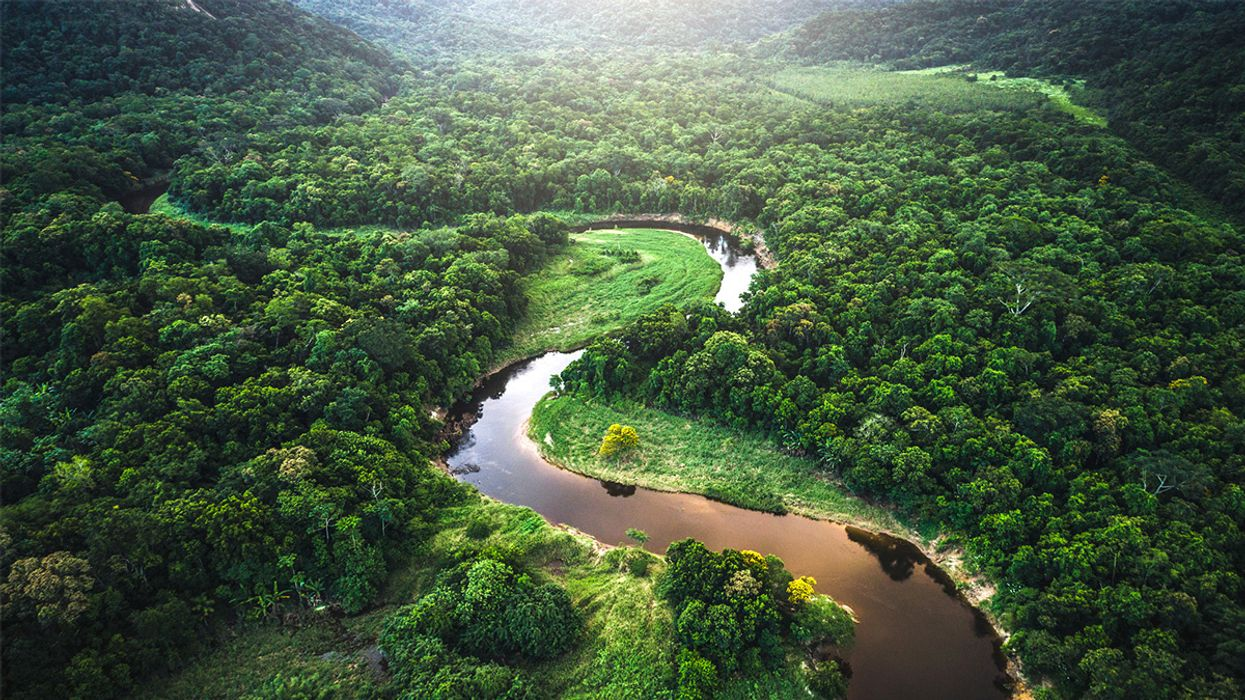 $10M in Prize Money for Mapping Rainforest Biodiversity