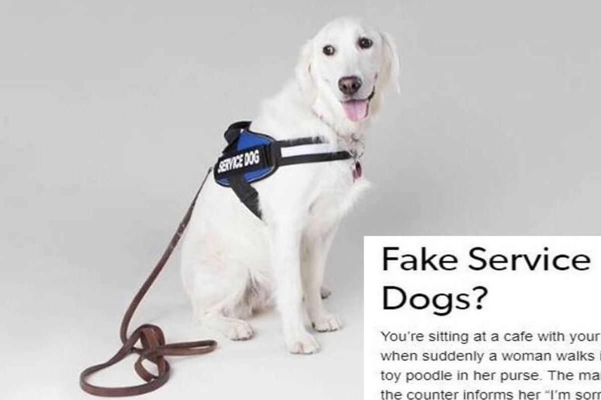 A disabled woman's post on fake service animals perfectly explains why it's a big problem