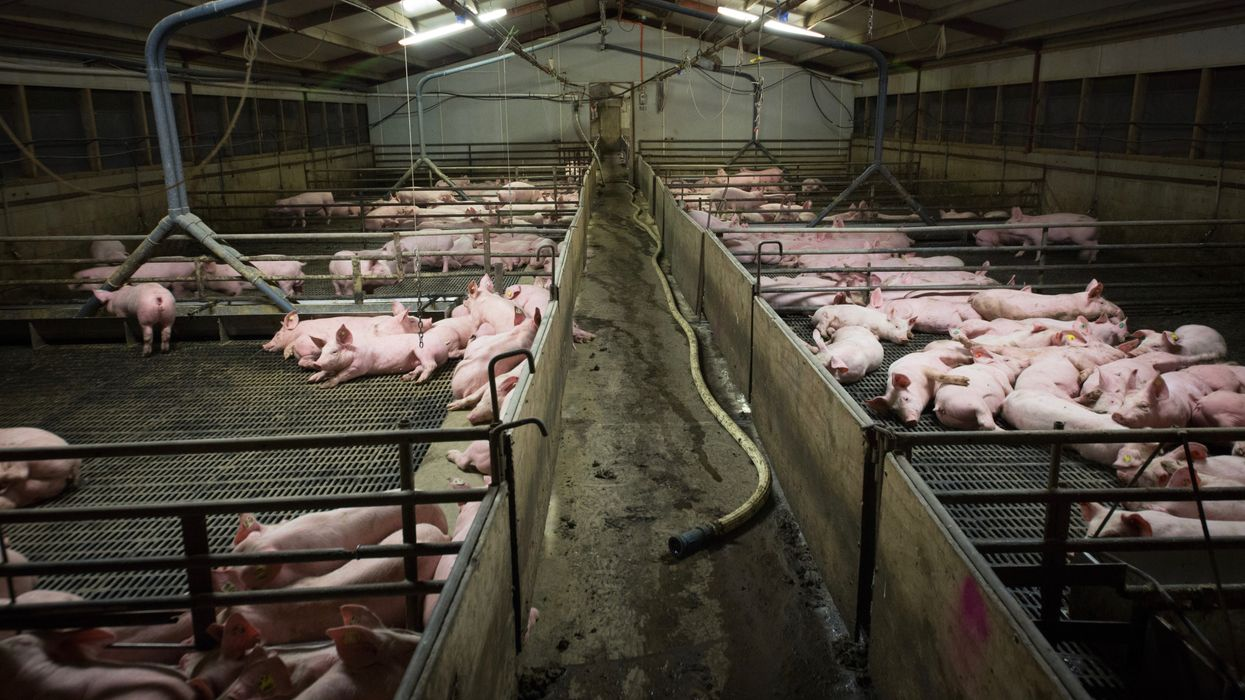 If Factory Farm Conditions Are Unhealthy for Animals, They're Bad for People Too