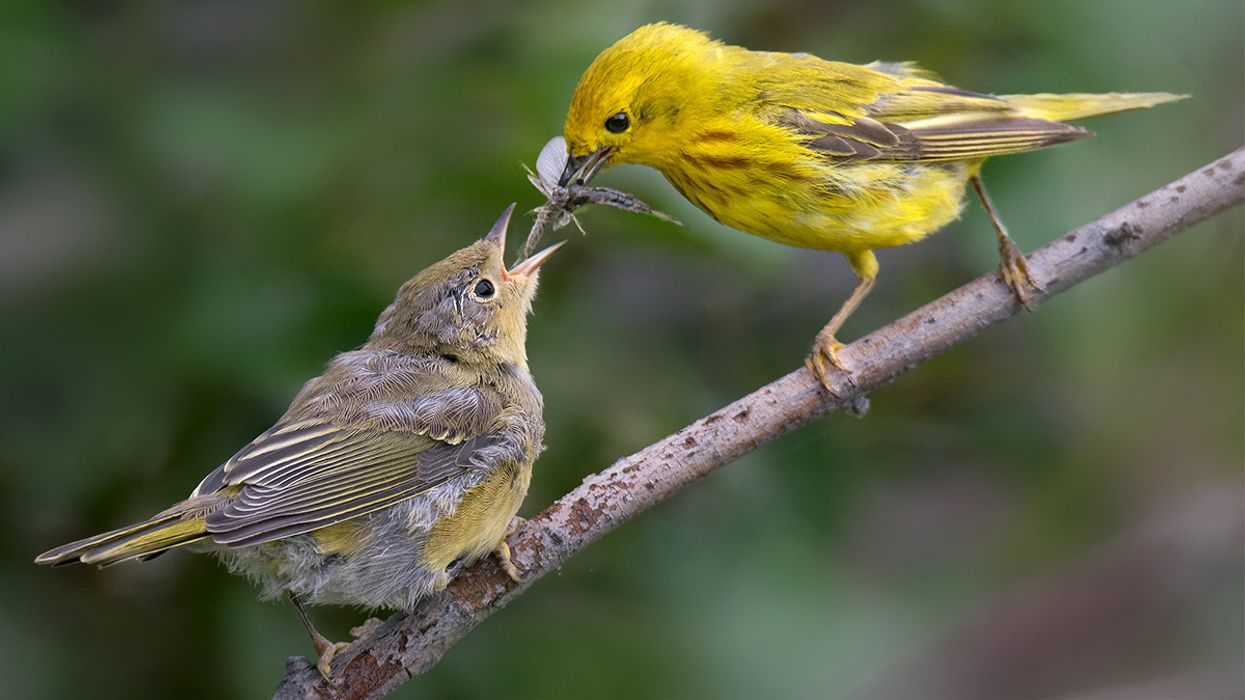 The Climate Crisis Is Making Birds Smaller